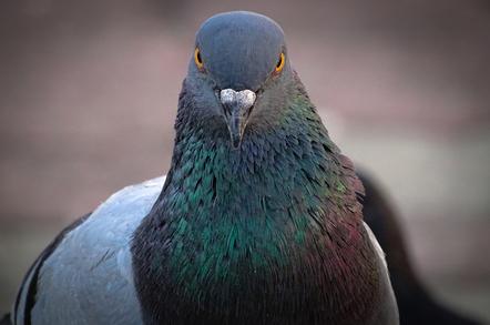 《一隻賽鴿揭發 SEO 公司不願告訴你的事》